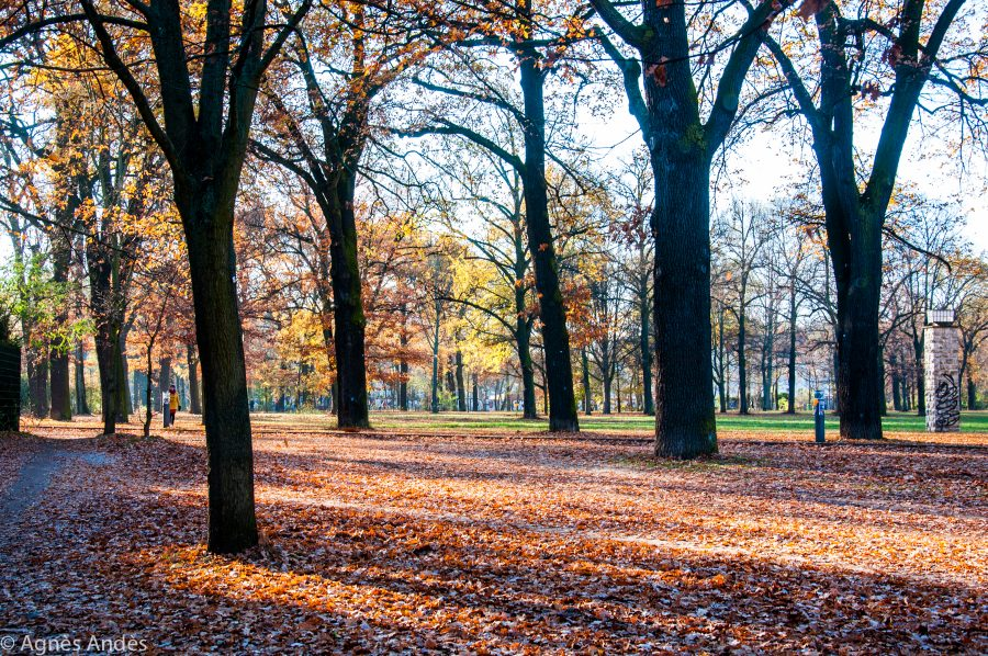 Beautiful Volkspark am Friedrichshain