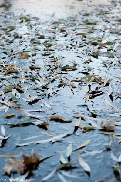 Frozen lake in Volkspark am Friedrichshain