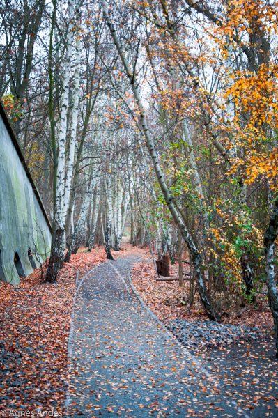 Natur-Park Schöneberger Südgelände